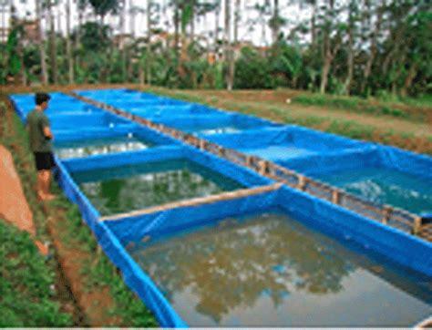 Pakan Ikan Lele Pf 500 ikan lele bagaimana kolam dan tips nya agrobagus