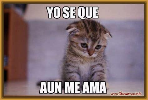 imagenes de gatos tristes con mensajes imagenes de gatitos tristes con frases lindas gatitos