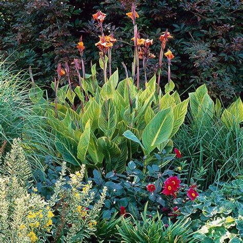 heat loving plants heat loving container garden plants gardens sun and flower