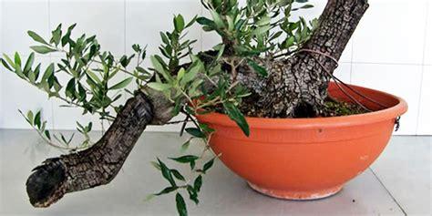 imagenes de flores que se reproducen asexualmente guia cultivo de plantas y hortalizas por acodo