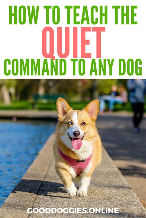 how to your to stop barking on command how to teach the command and get your to stop barking on cue
