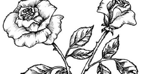 sketsa gambar bunga gambar pemandangan