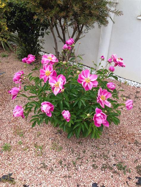 Japanese Garden Flowers Pinterest Japanese Garden Flowers