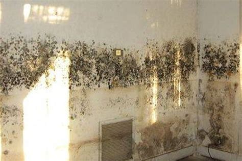 black mold in basement health risks mold side effects
