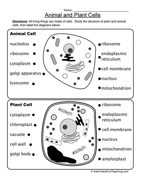 Animal And Plant Cells Worksheet Answers by Animal Plant Cells Worksheet