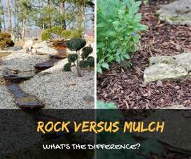 rock versus mulch get to know their differences