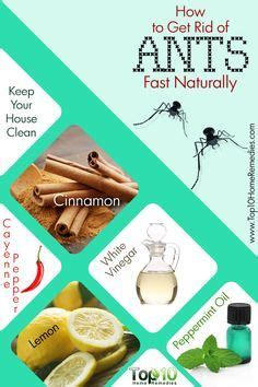 how to get rid of spiders from christmas tree 17 best images about household hints on stains soap scum and hydrogen peroxide