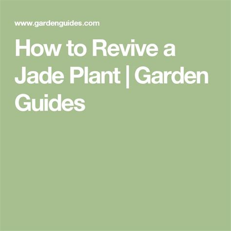 how to revive a plant 17 best ideas about jade plants on pinterest jade bonsai