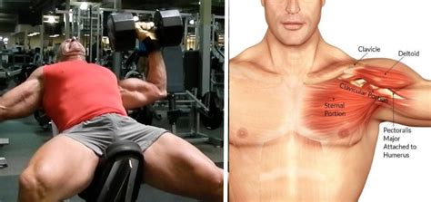 my shoulder hurts when i bench press bench press tips to get more from your chest workouts