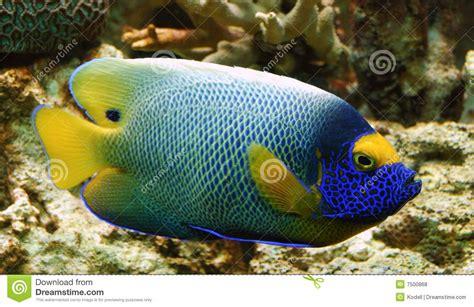 kleurrijke tropische vissen stock foto afbeelding