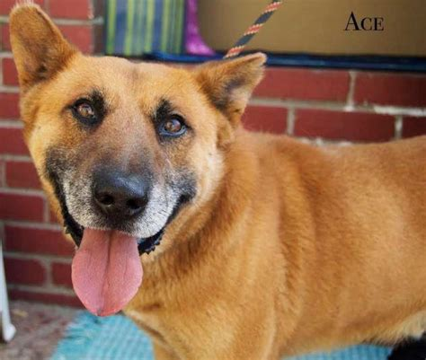 ace for dogs ace s pet rescue