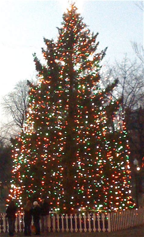 the halifax christmas tree for boston from one moment to