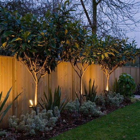 backyard trees landscaping ideas best 20 privacy trees ideas on privacy