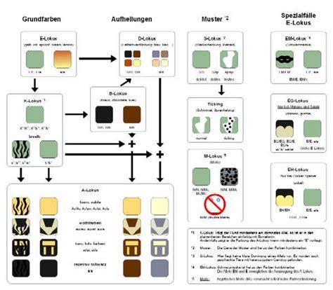 coat color calculator coat colour basic information labogen