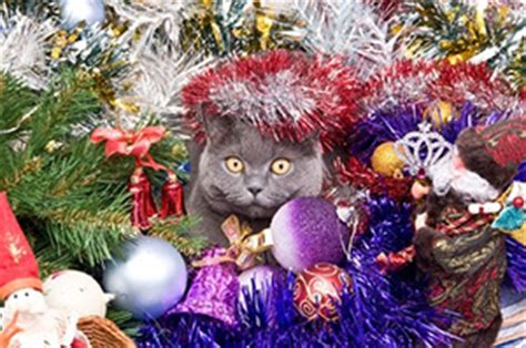 keeping cats from mantel decorations and trees and pets keeping them safe petmoneysaver
