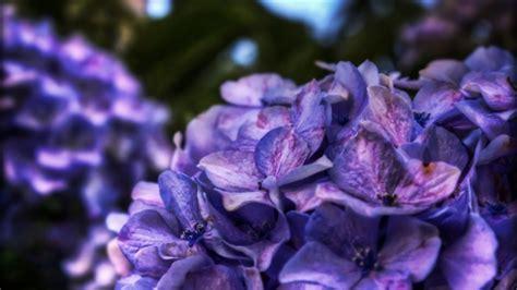 Dreamy Purple dreamy purple flower mac wallpaper free mac
