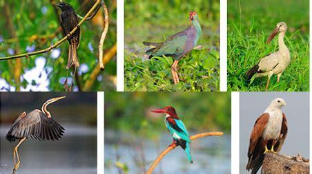 kumarakom bird sanctuary boating the adventurous wildlife of south india tourism guide