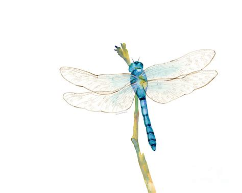 blue dragonfly painting by amy kirkpatrick