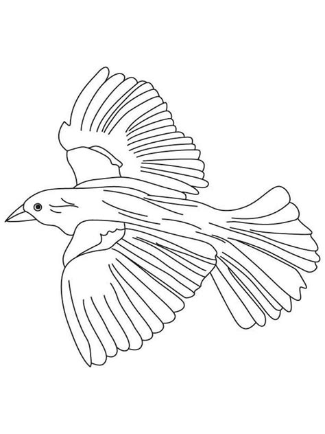 bird wing coloring page click the red winged blackbird coloring pages to view