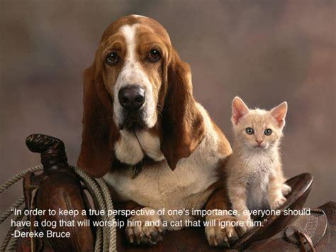 Animal Quotes Happy Animal Quotes Quotesgram