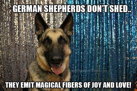 German Shepherd Shedding Tips by 17 Best Images About Pet Pins On Biscuits