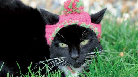 We Are The Cat Excerpt by Cats In Hats Pattern Excerpt Favecrafts