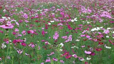 prato fiorito in inglese giardini