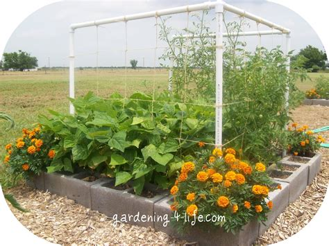 Garden Blocks by Gardening 4 Cinder Block Garden