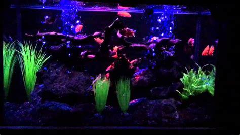 Neon Aquarium Decorations by Aquarium Led And Neon Light System