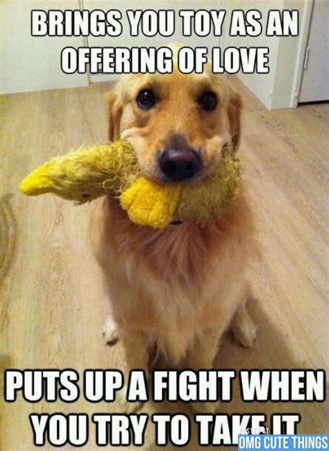 Dog Jokes Meme - dog meme 06 cute pinterest funny animal and animal