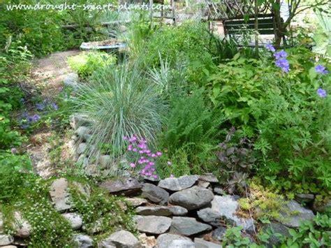 Drought Tolerant Plants water wise & low maintenance