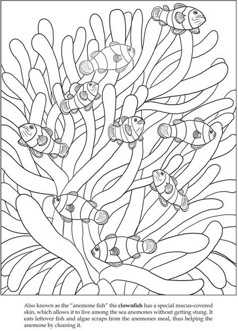 Welcome to Dover Publications Let's Explore! Sea Animals