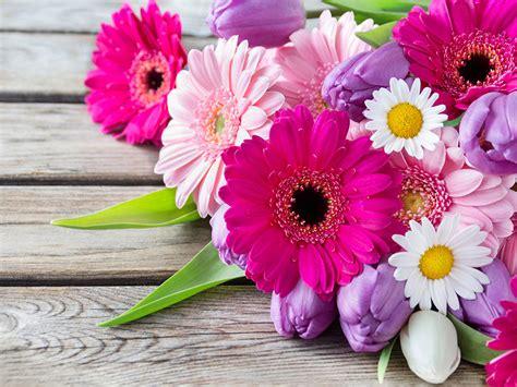 imagenes flores gerberas fondos de pantalla gerbera matricaria tulipas tablones de