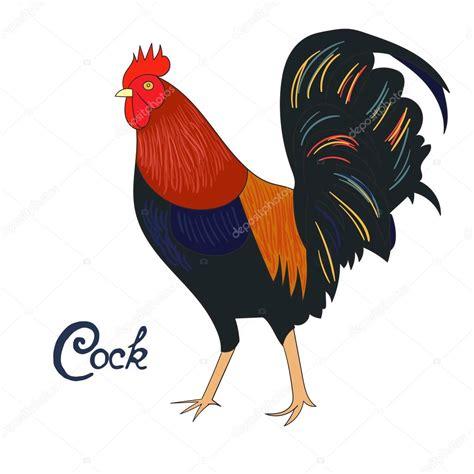 pelea de gallo s vector bird cock rooster vector illustration stock vector