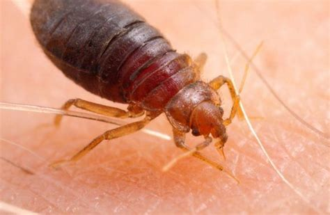 what keeps bed bugs away 1000 images about bugs go away on pinterest