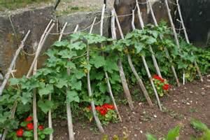 tomates et basilic ou l d associer les l 233 gumes les