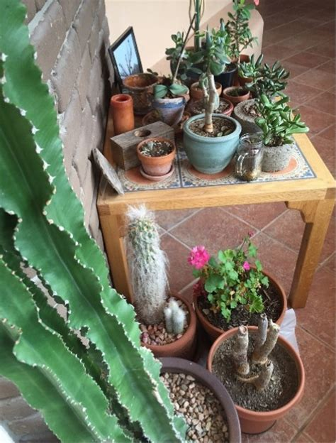 savoring succulents without busting the budget gardening