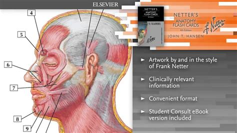 how to make anatomy flash cards netter s anatomy flash cards 4th edition