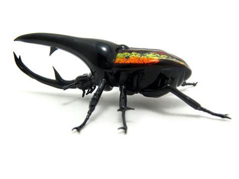 glass sculptor Wesley Fleming - artwork, 'Hercules Beetle'