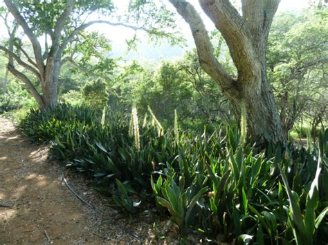 Koko Botanical Garden Visiting The Enchanting Koko Crater Botanical Garden