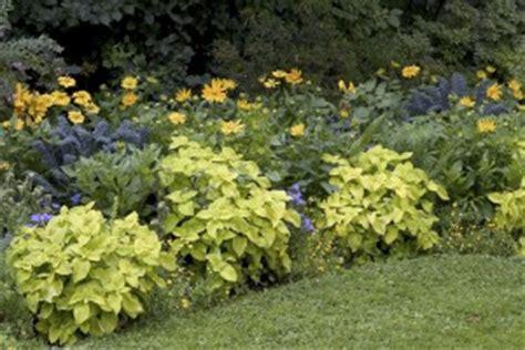 pflanzenauswahl garten ein schattiger garten tipps zur bepflanzung