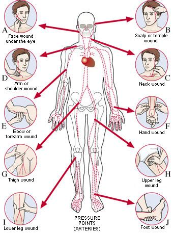 diagram of pressure points on the human human martial a lethal defense