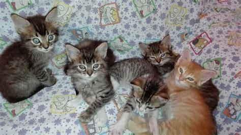 minicuentos de gatos y adopta un gato