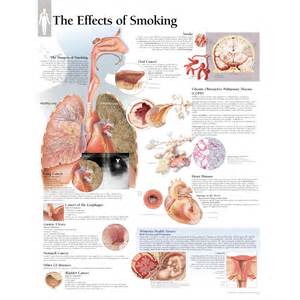 Scientific publishing the effects of smoking chart
