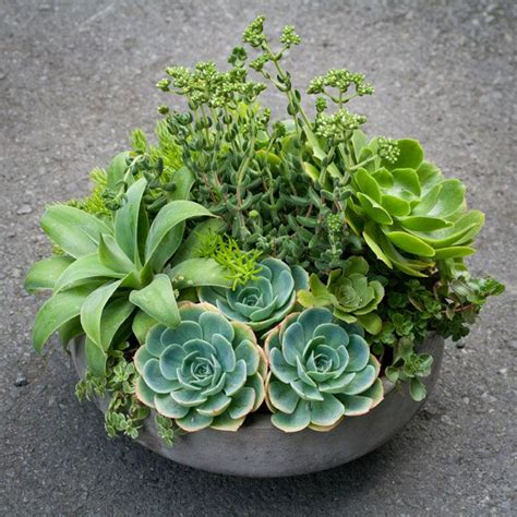 succulent arrangements from lila b design planters terrariums and succulent