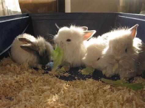ab wann sind kaninchen geschlechtsreif zoohandlung braun in uhingen ulmer str 17 goyellow de