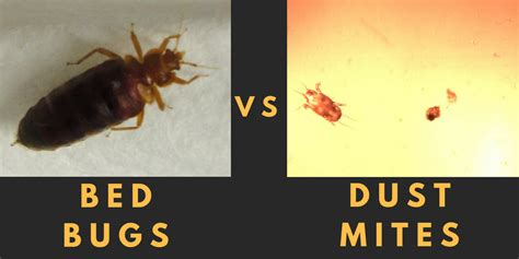 are bed bugs visible the difference between bed bugs dust mites airmid
