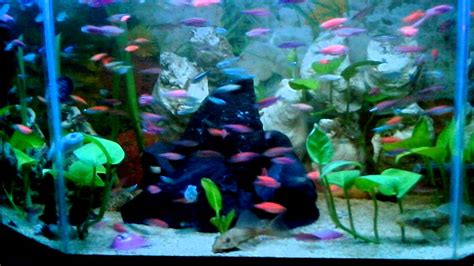 desain aquarium air tawar ikan hias air tawar 2 youtube