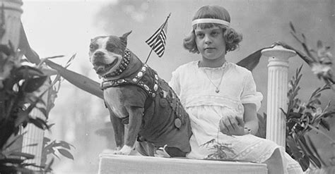 Sergeant Stubby Owner Meet Sgt Stubby The S Most War The Animal Rescue Site