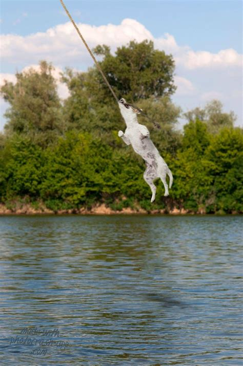 lake rope swing 125 best images about rope swings on pinterest lakes